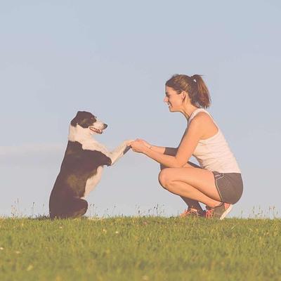 Dog training consultant