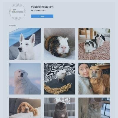 Pets of instagram